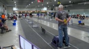 Saskatchewan flyball tournament more than just races for the dogs
