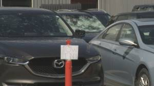 Industry advice on buying and selling vehicles impacted by hail damage