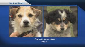 Shelter Pet Project Oct. 18 – Jack and Storm (02:23)