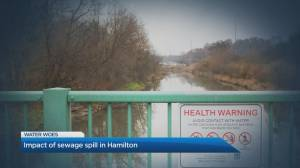 How a massive sewage spill is impacting Hamilton