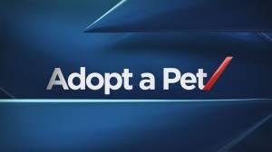 Pet of the Week: Nov 24 (01:29)