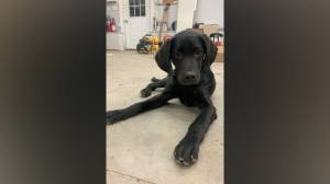 OPP investigating safety of pets after two separate incidents (02:14)