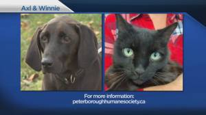 Shelter Pet Project Oct. 25 – Axl and Winnie