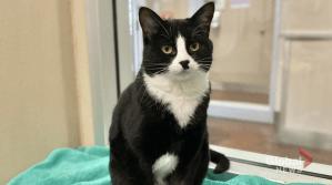 Adopt a Pet: Maligne the cat (04:45)