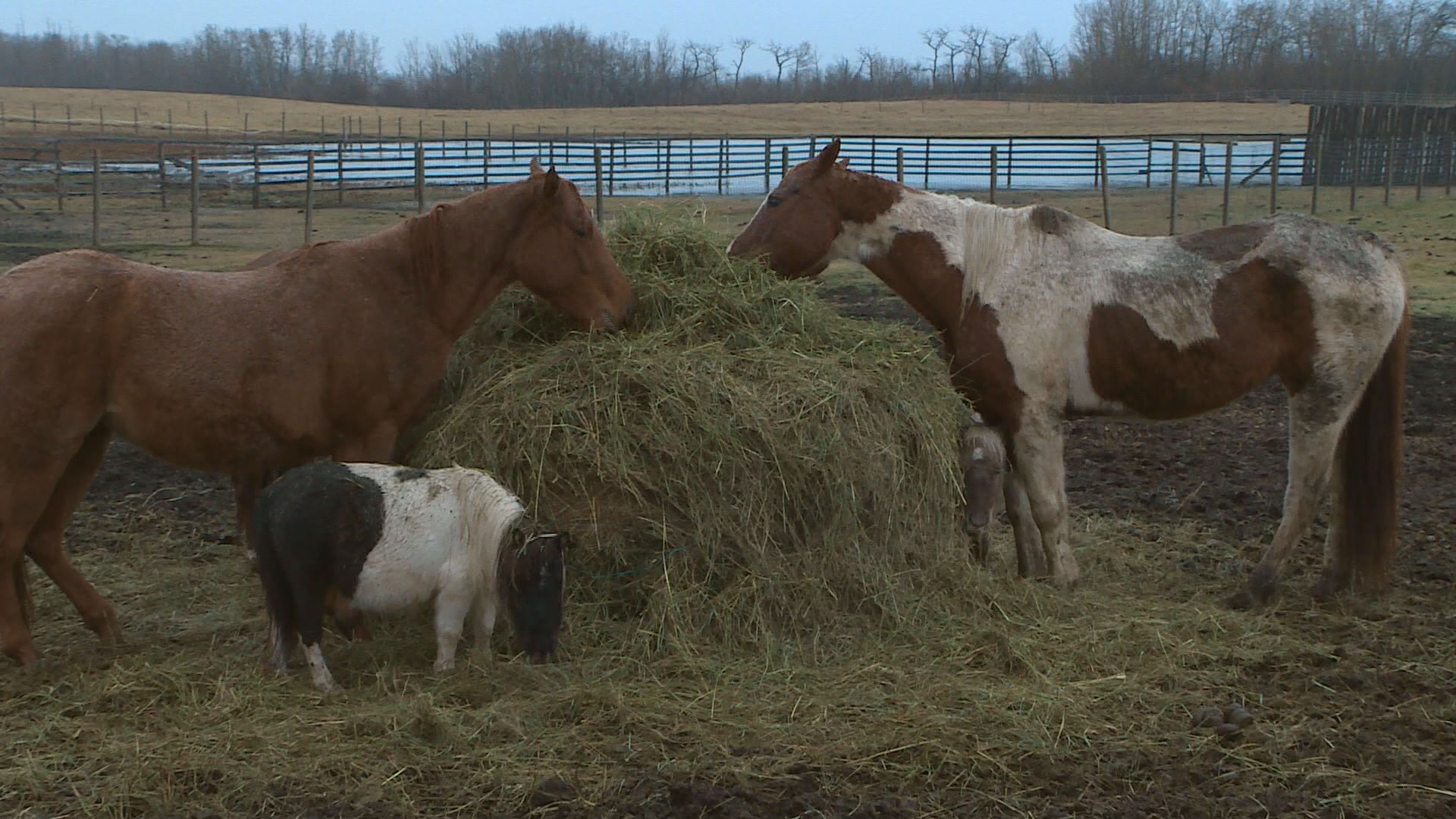 Hay shortage worrying farmers as winter approaches