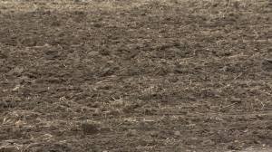 Winter cereal crops expected to thrive after early planting (01:30)