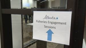 Alberta government seeks feedback on new fishing legislation