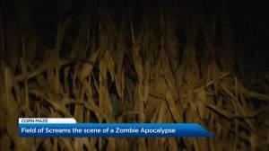 Vernon Corn maze turned into Zombie Apocalypse for October (01:28)