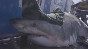 Great White Shark Research Team Embarks on Final N.S. Expedition (06:34)