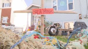 N.S. woman creates Halloween decorations from trash found on shorelines (01:57)