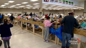 Customers go 'Krazy' for newest Calgary discount store (01:40)