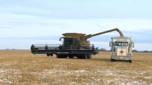 Snowy conditions add challenges to an already difficult harvest season