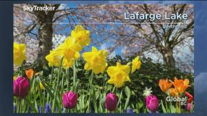 B.C. evening weather forecast: April 11 (02:31)