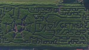 Chilliwack corn maze opens for season amid COVID-19 (01:50)