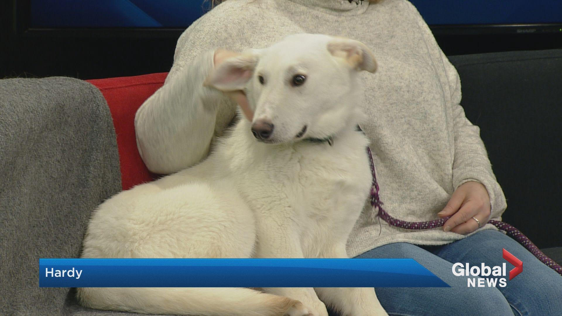 SCARS adoptable pets: Saturday, Jan. 18