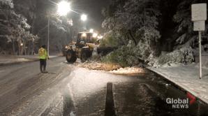 Tree cleared off Jubilee Avenue (00:20)