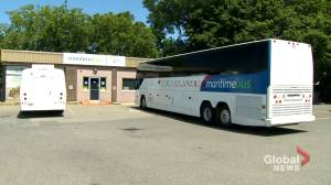 Maritime Bus to continue running routes as it looks for financial support (01:57)
