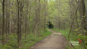 Large forested area in Rigaud acquired for preservation (01:44)
