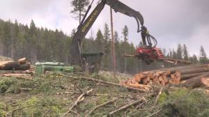 Residents in Kelowna-area neighbourhood outraged over logging (02:03)