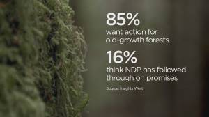 Poll finds 85% support for old growth protection (01:54)