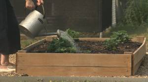 Alberta program aims to prevent garden food waste (01:33)