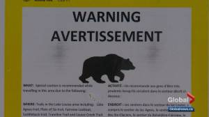 Hiker injured by black bear on Lake Louise trail