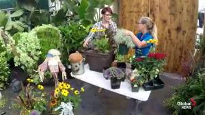 Get Gardening: Autumn Planters