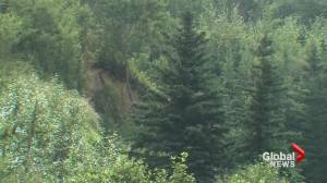 Concerns raised over new Alberta forest management agreement (01:54)
