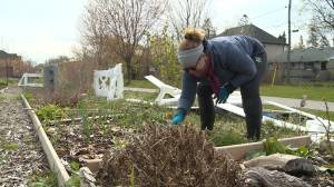 Community garden in Ajax re-opens amid COVID-19 pandemic