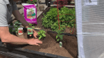 GardenWorks: warm weather gardening