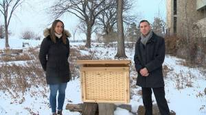 Pair of U of S students doing their part saving bees with bee hotels