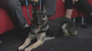 Adopt A Pal: Manitoba All Shepherd Rescue (04:42)