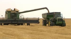Federal carbon tax system could hit Saskatchewan farmers hard: APAS (02:17)