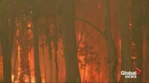 Climate change contributing to Australia's wildfires emergency says World Meteorological Organization