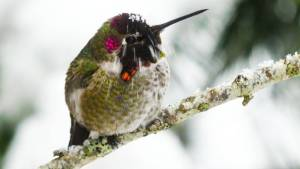 Protecting hummingbirds during winter