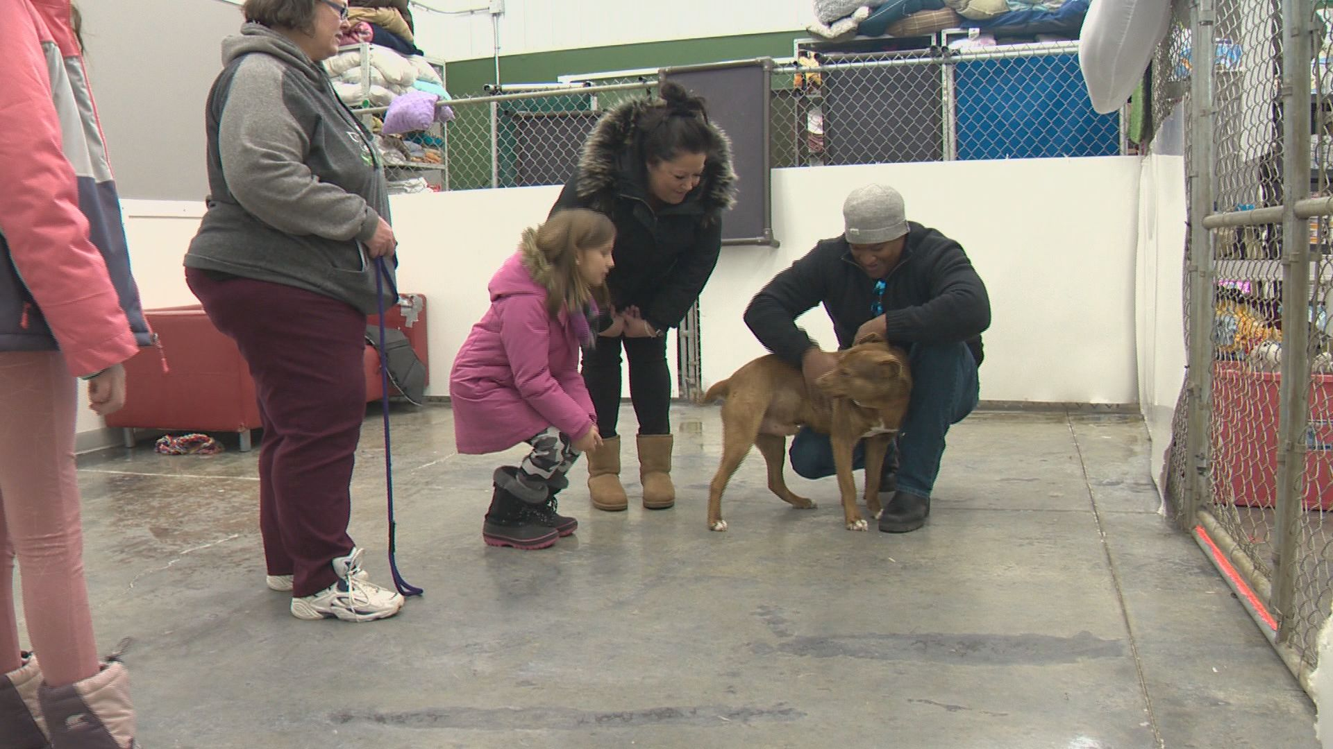 Alberta animal shelter rescues 73 dogs from the cold
