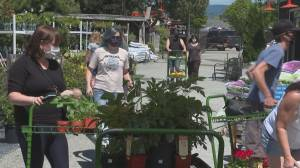 Kelowna garden centres busy amid pandemic (01:46)
