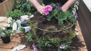 GardenWorks: Moss hanging basket