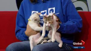 Cochrane Humane Society Pet of the Month: Scrabble and Yahtzee