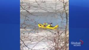 Dramatic North Saskatchewan River dog rescue caught on video  in Edmonton Wednesday afternoon (09:07)