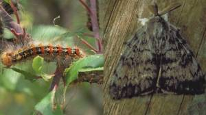 Gypsy moth spraying information session
