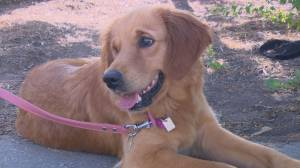 China rescue dog arrives in Saskatchewan (01:54)