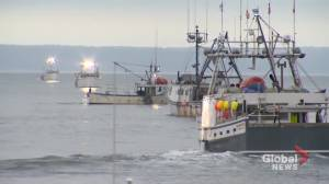 Commercial fishery alliance responds to Treaty Fishery plan (02:02)