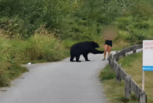 Woman has close encounter with Black Bear on Coquitlam Crunch trail (00:50)