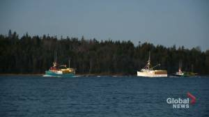 Feds to help seafood industry market in N.B. market its product