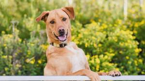 AARCS adoptable pet of the month