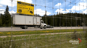 Electric wire to keep dandelion-loving bears off of Highway 1