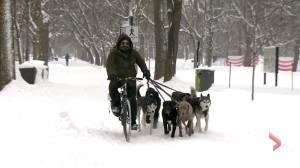 Coronavirus: Dog walkers are an essential service, say owners (01:58)