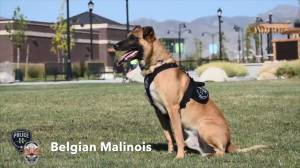 Herriman Police Department shows off their latest addition to their K-9 unit
