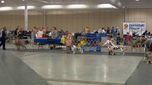 Annual SKOC Dog Show and Trial a hit for younger dog handlers